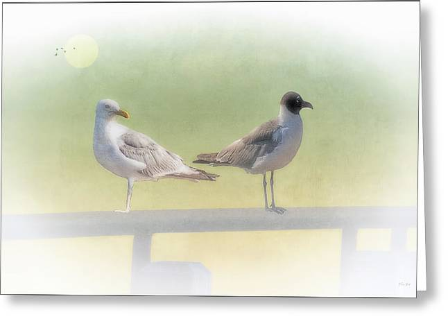 Sundown Framed Prints Greeting Cards - Seagulls  In The Morning Fog Greeting Card by Tom York Images
