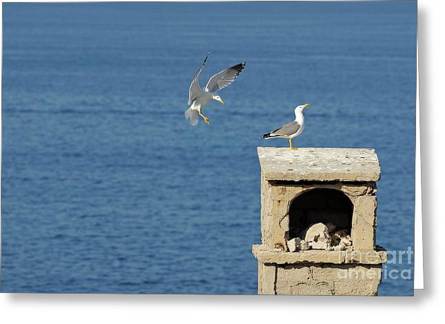 Seagulls landing on wall overlooking sea Greeting Card by Sami Sarkis