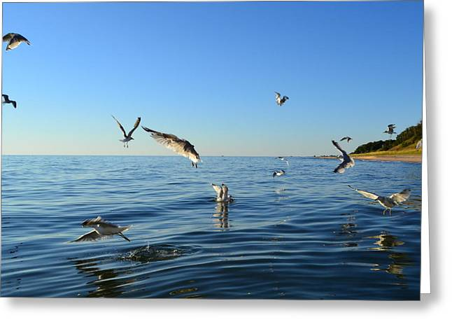 Seagulls over Lake Michigan Greeting Card by Michelle Calkins