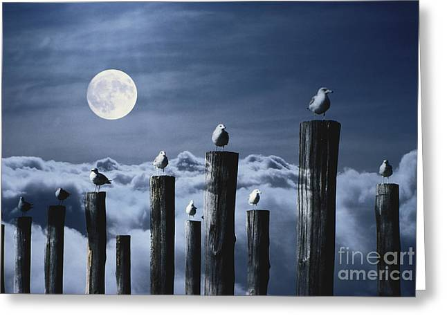 Multiple Exposures Greeting Cards - Seagulls Perched On Wooden Posts Greeting Card by Stocktrek Images