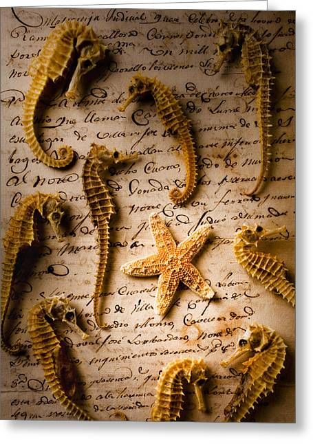 Aquatic Greeting Cards - Seahorses and starfish on old letter Greeting Card by Garry Gay