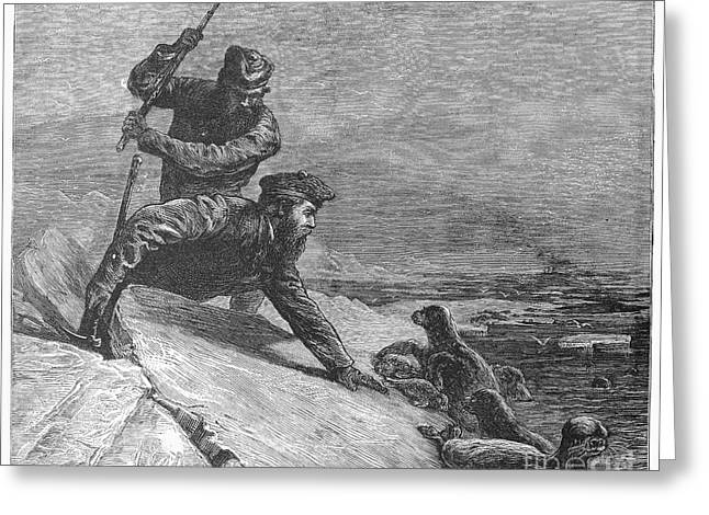 1874 Greeting Cards - Seal Hunting, 1874 Greeting Card by Granger