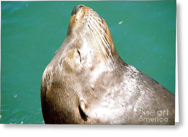 Best Sellers -  - Santa Cruz Wharf Greeting Cards - Seal Greeting Card by Jo Montana