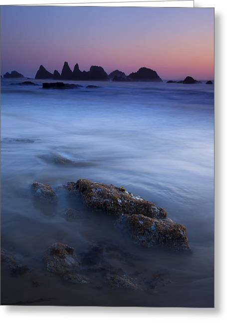 Seals Greeting Cards - Seal Rock Glow Greeting Card by Mike  Dawson