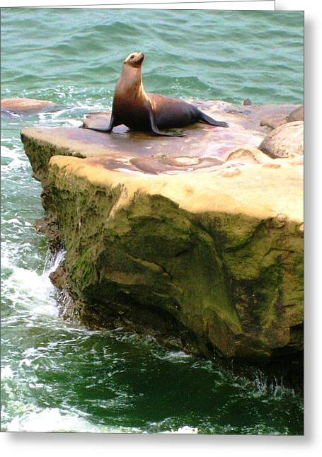 Seal Rock Greeting Card by Sue Halstenberg