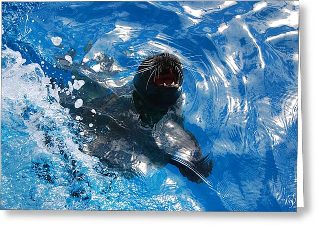 California Sea Lions Greeting Cards - Seal Greeting Card by Thea Wolff