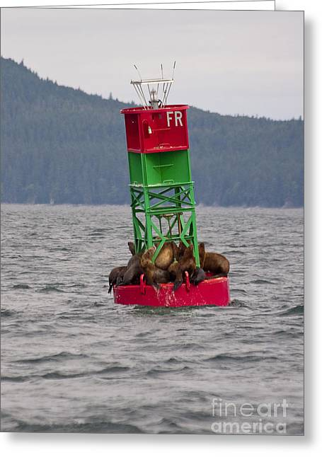 California Sea Lions Greeting Cards - Seals on the Bouy Greeting Card by Darcy Michaelchuk