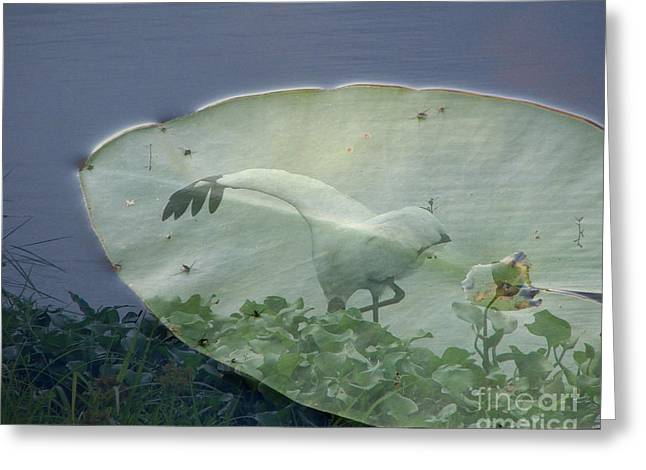 White As Snow Greeting Cards - Search Greeting Card by Priscilla Richardson