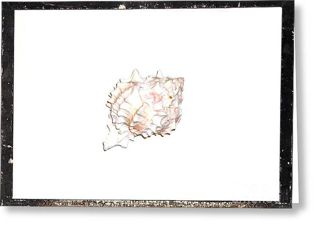 Seashell Digital Art Greeting Cards - Seashell  C Greeting Card by Marsha Heiken
