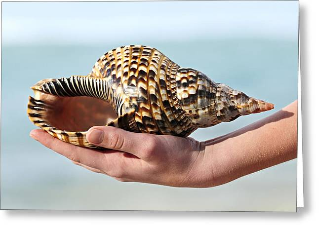 Hand-held Greeting Cards - Seashell in hand Greeting Card by Elena Elisseeva