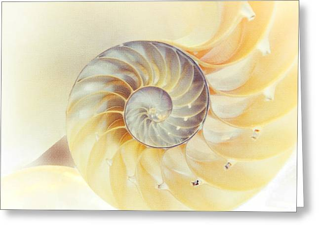 SeaShell. Light Version Greeting Card by Jenny Rainbow