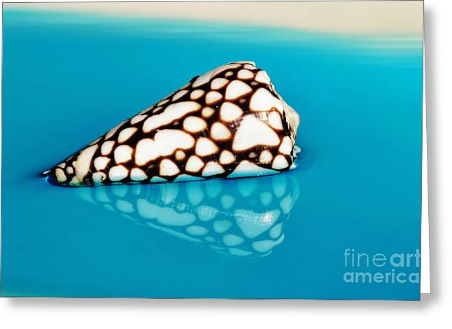 Spotted Shells Greeting Cards - Seashell Wall Art 8 - Conus Marmoreus Greeting Card by Kaye Menner
