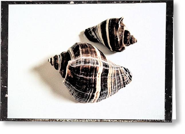 Seashells A Greeting Card by Marsha Heiken