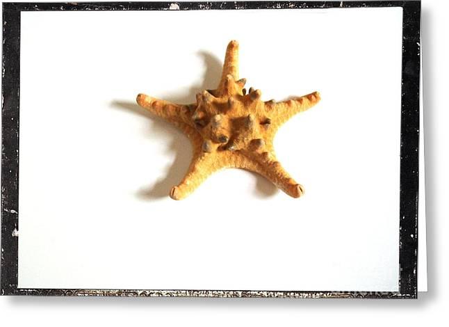 Seashells B Greeting Card by Marsha Heiken