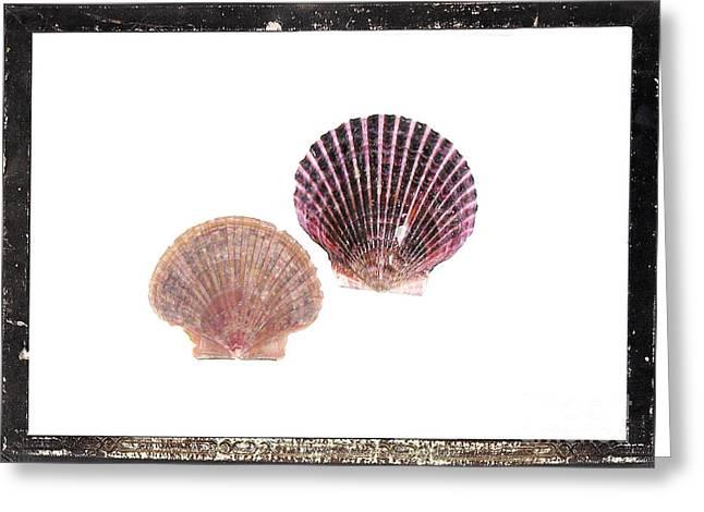 Seashells D Greeting Card by Marsha Heiken