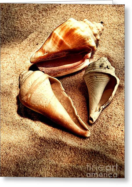 Shell Texture Greeting Cards - Seashells Greeting Card by HD Connelly