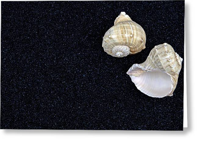 Contrast Greeting Cards - Seashells On Black Sand Greeting Card by Joana Kruse
