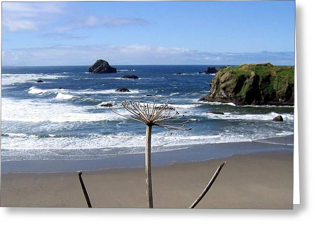 Seaside Solitude Greeting Card by Will Borden