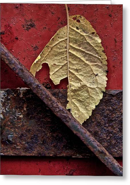 Fraying Greeting Cards - Season Of Decay Greeting Card by Odd Jeppesen