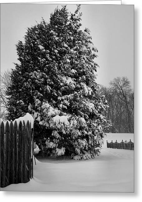 Framed Winter Snow Photograph Greeting Cards - Season of White Greeting Card by Steven Ainsworth