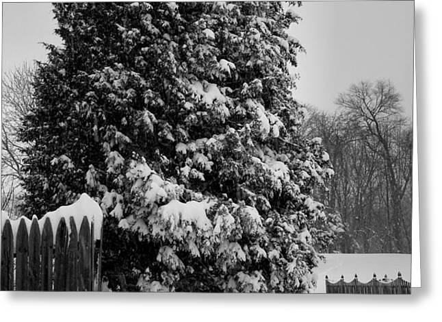 Season of White Greeting Card by Steven Ainsworth