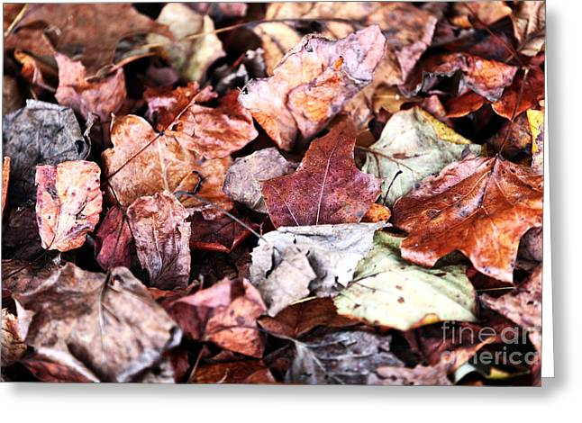Photos Of Autumn Greeting Cards - Seasons Change Greeting Card by John Rizzuto