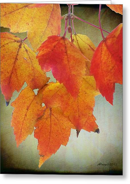 Peaceful Scenery Greeting Cards - Seasons leaves Greeting Card by Anne Lacy
