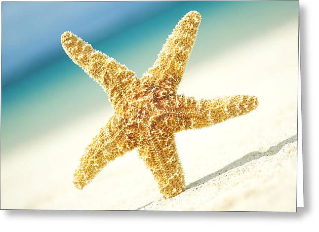 Asteroidea Greeting Cards - Seastar on Beach Greeting Card by Mary Van de Ven - Printscapes