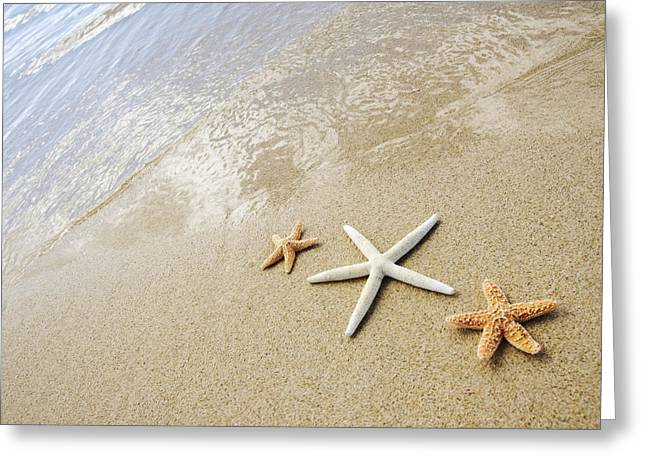 Ashore Greeting Cards - Seastars on Beach Greeting Card by Mary Van de Ven - Printscapes