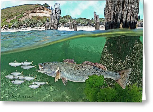 Fly Fishing Drawings Greeting Cards - Seatrout Attack Greeting Card by Alex Suescun