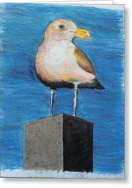 Seattle Pastels Greeting Cards - Seattle Sea Gull Greeting Card by Ken Martin