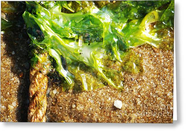 Rope Photographs Greeting Cards - Seaweed And Rope Greeting Card by HD Connelly