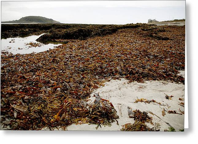 Algal Greeting Cards - Seaweed Covered Beach Greeting Card by Dr Keith Wheeler