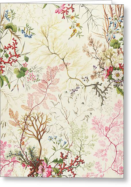 Wallpaper Tapestries Textiles Greeting Cards - Seaweed design for silk material Greeting Card by William Kilburn