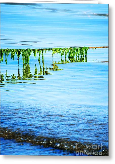 Provincetown Greeting Cards - Seaweed Greeting Card by HD Connelly