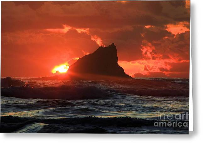 Beaches In Washington Greeting Cards - Second Beach Shark Greeting Card by Adam Jewell