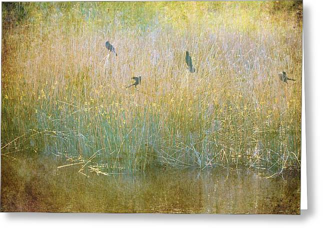 Soft Light Greeting Cards - Secrets Buried In August Greeting Card by Jan Amiss Photography