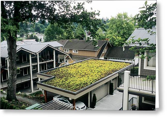 Roof Covering Greeting Cards - Sedum Roof, Early June Greeting Card by Alan Sirulnikoff