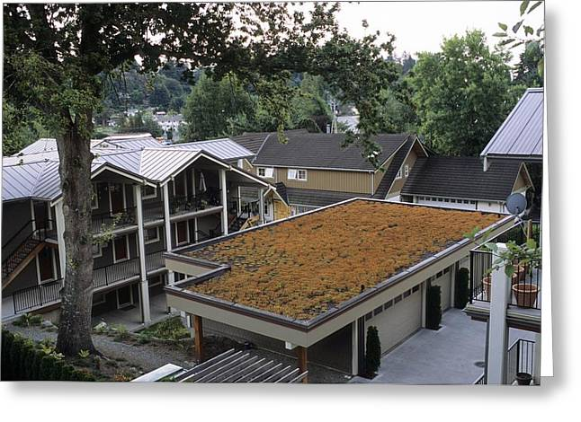 Roof Covering Greeting Cards - Sedum Roof, Mid-august Greeting Card by Alan Sirulnikoff