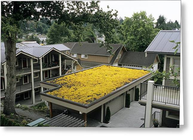 Roof Covering Greeting Cards - Sedum Roof, Mid-july Greeting Card by Alan Sirulnikoff