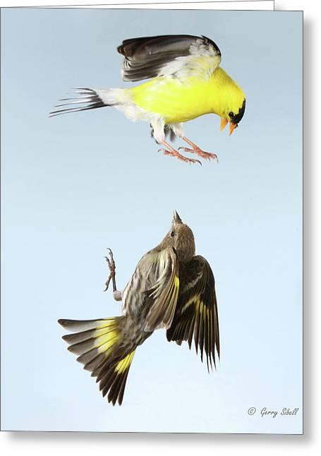 Canary In Flight Greeting Cards - See These Claws Greeting Card by Gerry Sibell