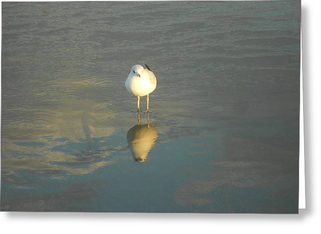 Seagull Reflection Greeting Cards - Seeing Double Greeting Card by Joe  Burns