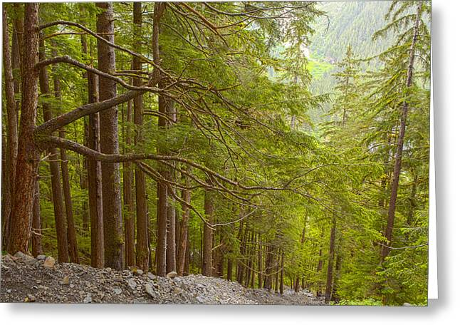 Southeast Alaska Greeting Cards - Seeking the Light Greeting Card by Tim Grams
