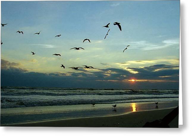 Panoramic Ocean Greeting Cards - Segull Pano Greeting Card by Deborah Tinter-Dietrich