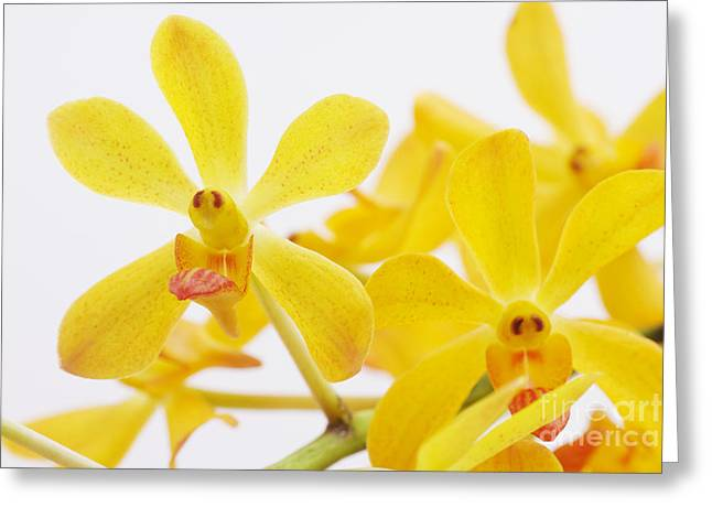Healthy-lifestyle Greeting Cards - Selective Focus Greeting Card by Atiketta Sangasaeng