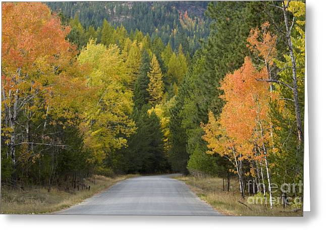 Scenic Drive Greeting Cards - Selkirk Color Greeting Card by Idaho Scenic Images Linda Lantzy