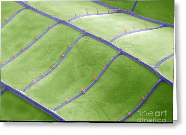 Junius Greeting Cards - Sem Of Dragonfly Wing Greeting Card by Ted Kinsman