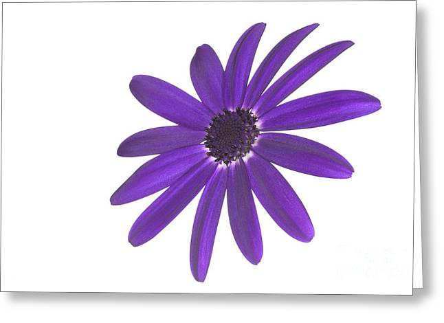 Senetti Greeting Cards - Senetti Deep Blue head Greeting Card by Richard Thomas