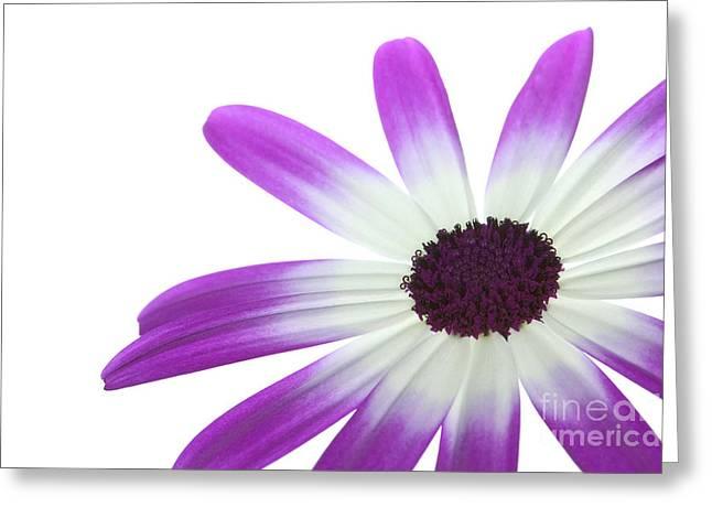 Senetti Magenta Bi-Color Lower right Greeting Card by Richard Thomas