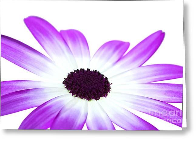 Senetti Greeting Cards - Senetti Magenta Bi-Colour Greeting Card by Richard Thomas